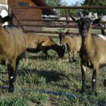 kozy - Exotika na ranči Bítovany