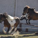 Koně za běhů- Exotika na ranči Bítovany